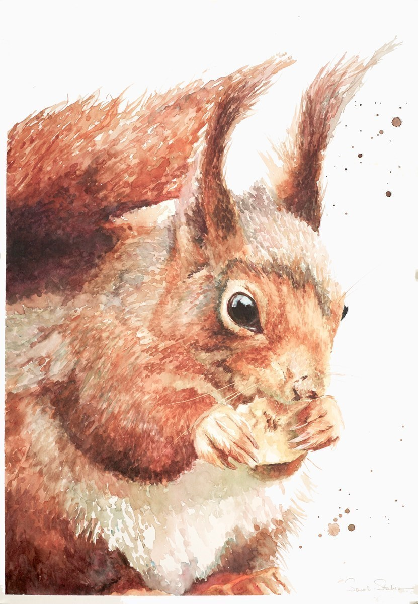 The Banana Thief (Red Squirrel) by Sarah Stokes -  sized 16x23 inches. Available from Whitewall Galleries